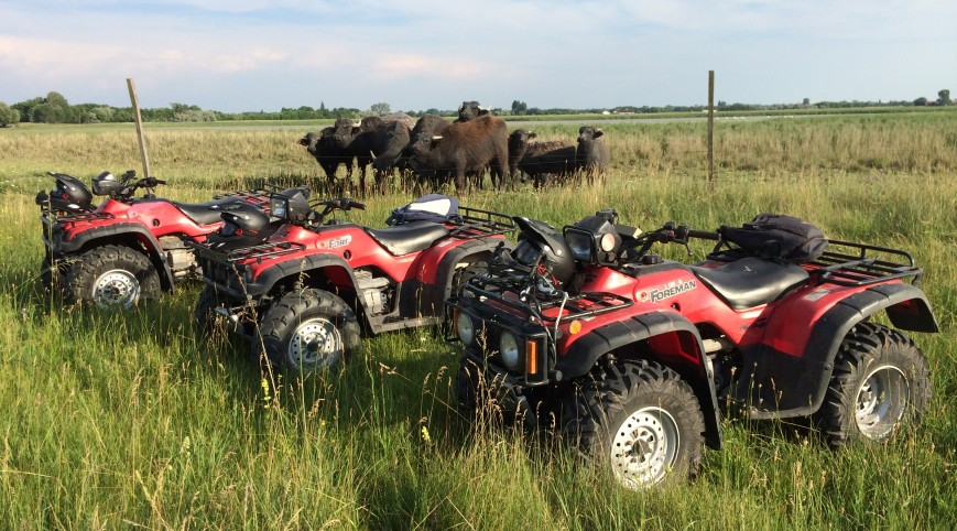 Quad Szafari a Dél-Alföld szívében 2 quad 3 óra 2 fő