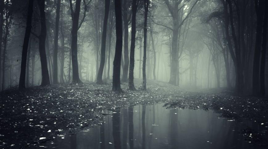 Láthatatlan Erdő-szabadulós játék 4 fő