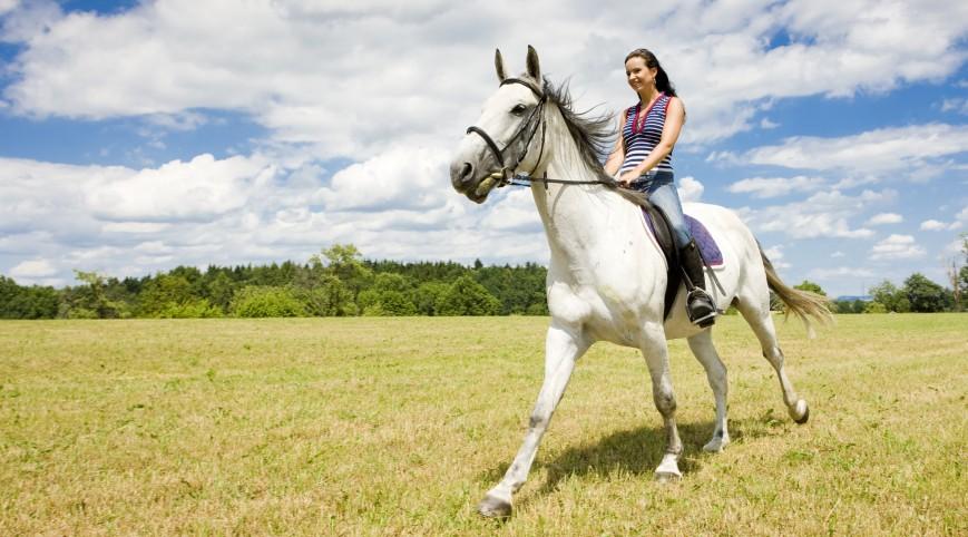 Privát lovasoktatás 5X60 perc télen-nyáron