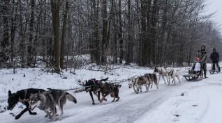 Kutyaszánozás Kecskemét környékén 10 km 1 fő