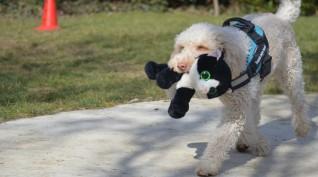 JóGazdi élményworkshop hivatásos terápiás kutyákkal