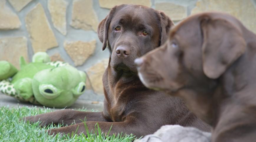 Párban szép az élet! Párkapcsolati élményprogram terápiás kutyákkal